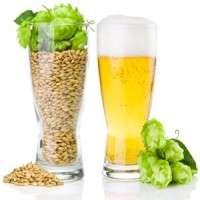 啤酒花提取物 制造商
