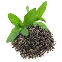 天然绿茶 制造商