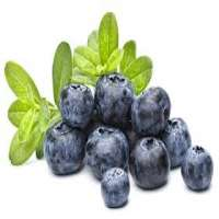 Blueberry Flavor Manufacturers