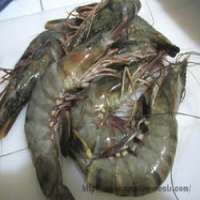 Black Tiger Prawns Manufacturers
