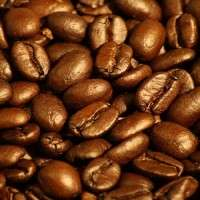 阿拉比卡咖啡豆 制造商