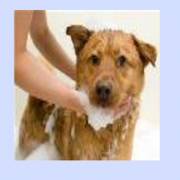 Pet Grooming Service Manufacturers