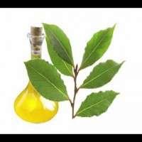 Bay Leaf Oils Manufacturers