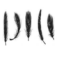 羽毛刷 制造商
