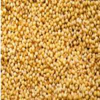 Foxtail Millet Manufacturers