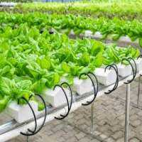 Hydroponic Systems Manufacturers