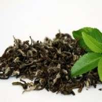 有机绿茶 制造商
