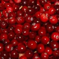 蔓越莓味 制造商