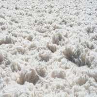 油腻的羊毛 制造商