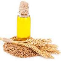Wheat Germ Oil Manufacturers