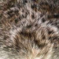 Animal Hair Manufacturers