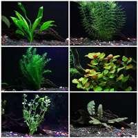 Aquarium Plants Manufacturers