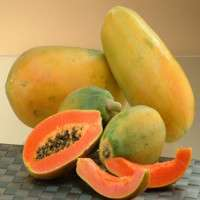 Fresh Papaya Manufacturers