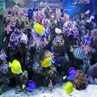 Marine Aquarium Manufacturers