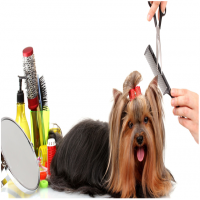 Dog Grooming Services Manufacturers