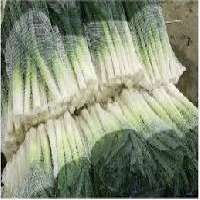 Vegetable Packaging Materials Manufacturers