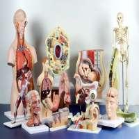 Biological Models Manufacturers