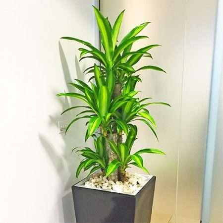 快乐的植物护理 制造商