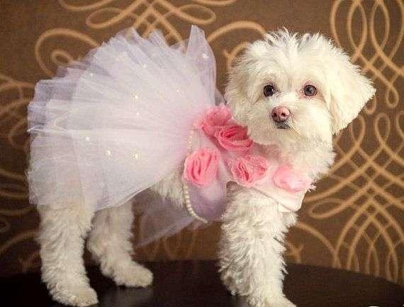 Harness Dog Dress Manufacturers