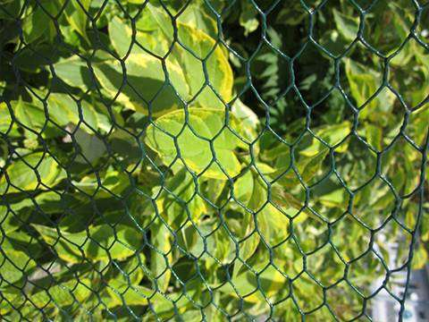 Hexagonal Wire Netting Plant Manufacturers