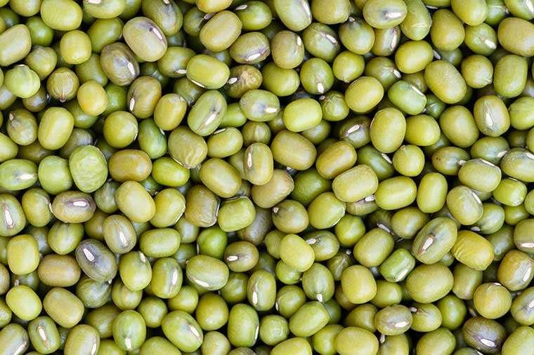 Mung Bean Manufacturers