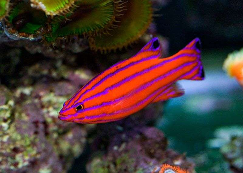 Salt Water Tropical Fish Manufacturers
