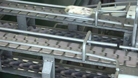 海鲜生产线 制造商