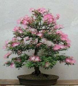 Silk Flowering Tree Manufacturers