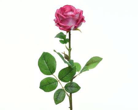 丝梗玫瑰 制造商