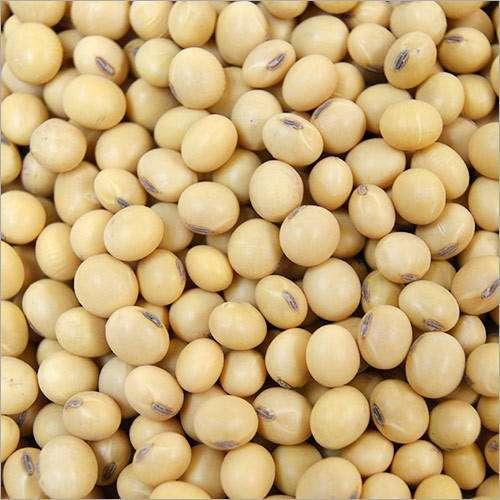 大豆种子 制造商