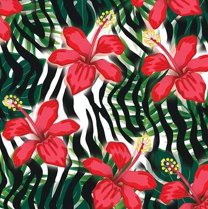 斑马热带百合花 制造商