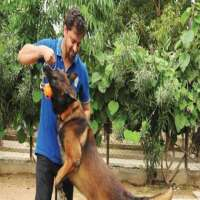 Dog Training Services Manufacturers