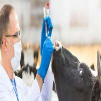 Animal Treatment Services Manufacturers