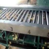 Onion Grading Machine Manufacturers