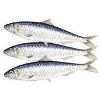 沙丁鱼 制造商