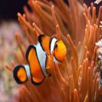 Clown Fish Importers