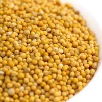 Yellow Mustard Seed Manufacturers