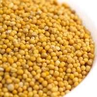 黄芥菜籽 制造商