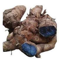 Black Ginger Manufacturers