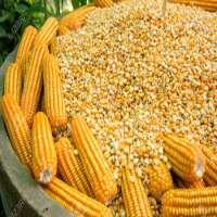 玉米 制造商