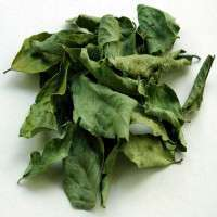 Curry Leaves Importers
