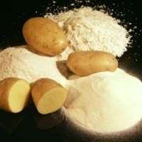 马铃薯粉 制造商