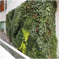生物墙 制造商