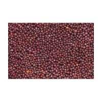 红芥菜籽 制造商