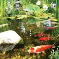 Fish Pond Manufacturers