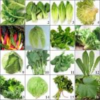 Leaf Vegetables Importers