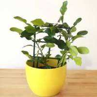 Lime Plants Manufacturers