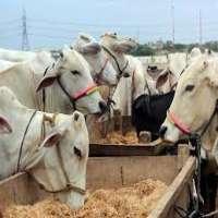 Animal Breeding Service Manufacturers