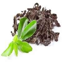 红茶提取物 制造商