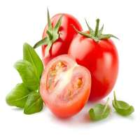 Tomato Extract Manufacturers